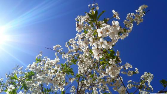 Spring tree in the sunshine  wallpaper