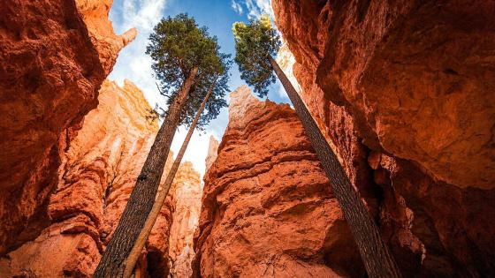 Amazing Bryce Canyon wallpaper