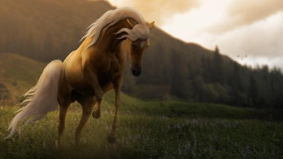 Horse in grassland  wallpaper