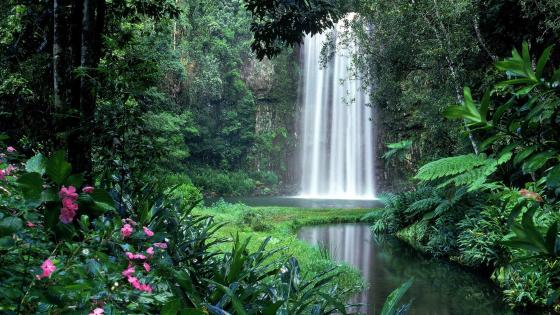 Millaa Millaa Waterfall in the rainforest - Australia  wallpaper