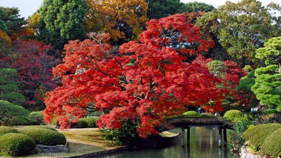 Rikugien Gardens -Tokyo, Japan  wallpaper
