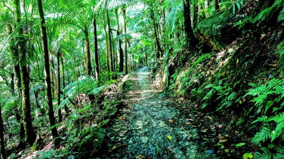 El Yunque National Forest - Puerto Rico wallpaper