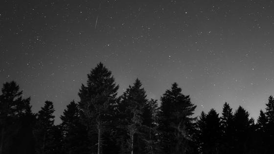 Starry night monochrome  wallpaper