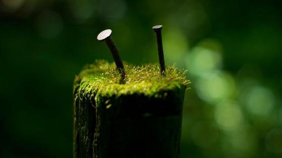 Mossy macro photography wallpaper