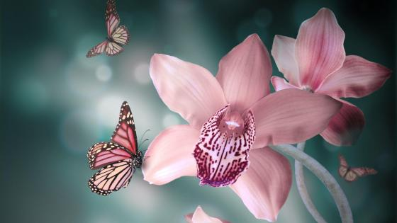 Pink orchids with butterflies wallpaper