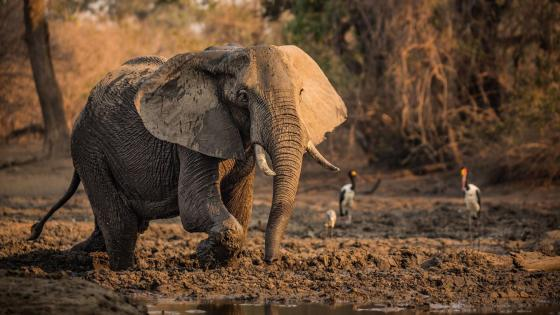Beautiful elephant photography  wallpaper