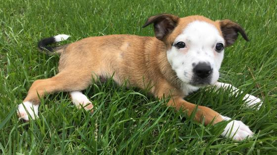 Cute puppy in the grass  wallpaper
