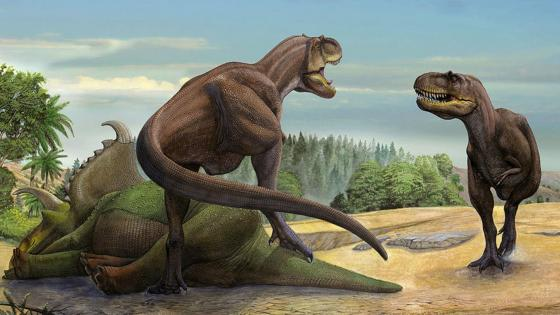 Tyrannosaurus rex wallpaper