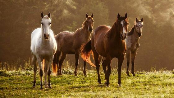 Horses in the pasture  wallpaper