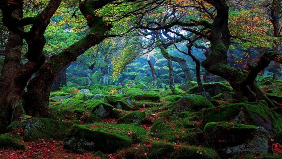 Autumn mossy forest wallpaper
