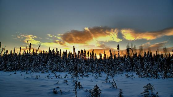 Alaskan winter landscape wallpaper