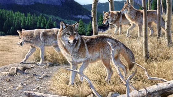 Gray wolf painting art wallpaper