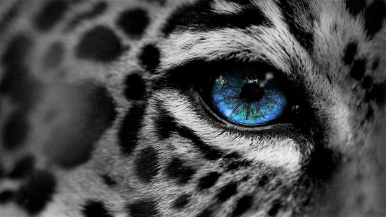 Black White Jaguar wallpaper