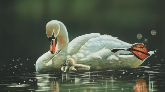 Swan family wallpaper