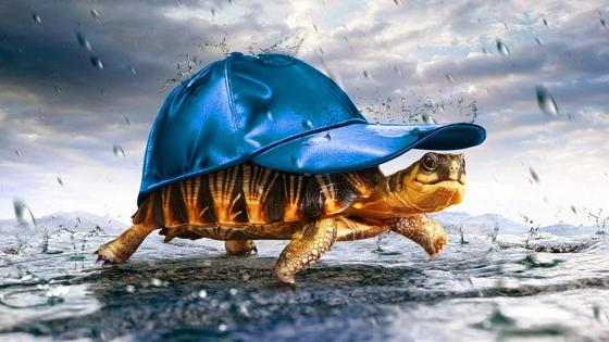 Turtle Under The Rain wallpaper