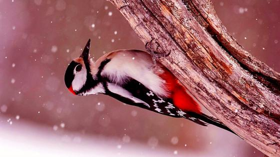 Bird On Tree Under The Snow wallpaper