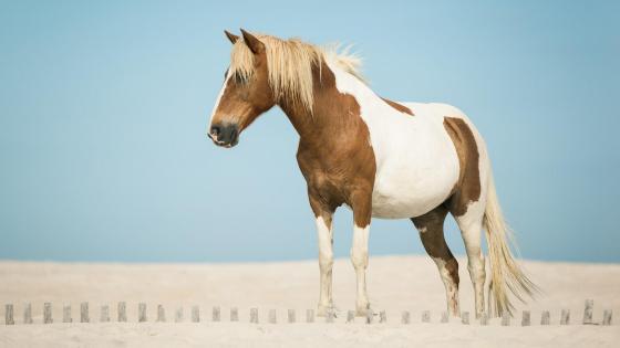 Western horse  wallpaper