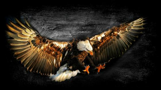 Flying eagle art  wallpaper