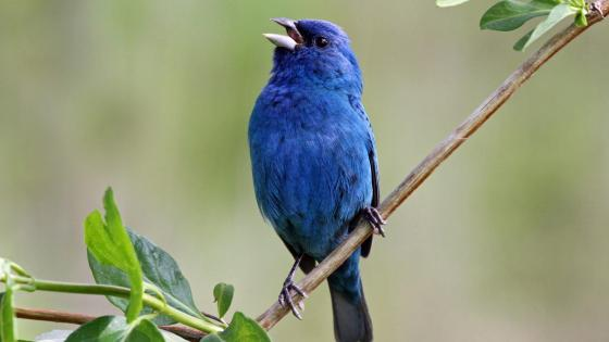 Little blue bird sitting on a tree branch wallpaper