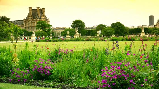 Tuileries Garden, Paris, France  wallpaper