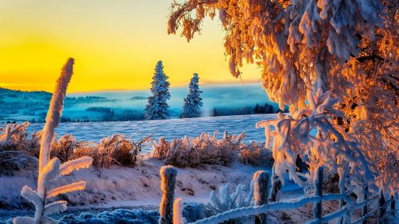 Amazing winter sunset ❄️☀️ wallpaper