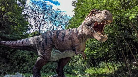 T-Rex dino in the Dino Park, Bratislava, Slovakia wallpaper