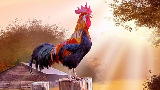 Cock in the farm painting art wallpaper
