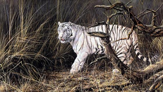 Siberian Tiger - Painting art wallpaper