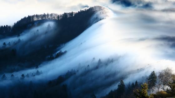 Misty winter wallpaper