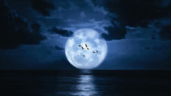 Supermoon on the night sky above the sea  wallpaper