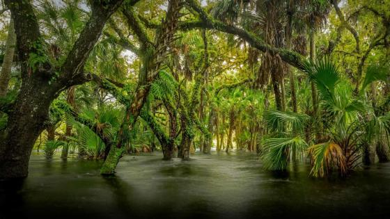Myakka River State Park wallpaper