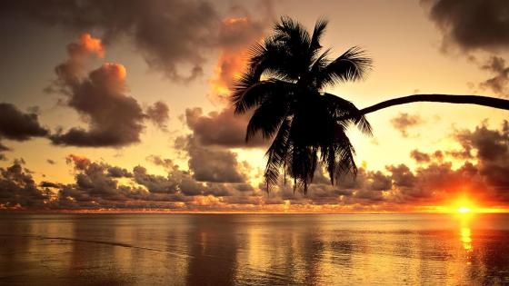 Sunset above the sea in Hawaii wallpaper