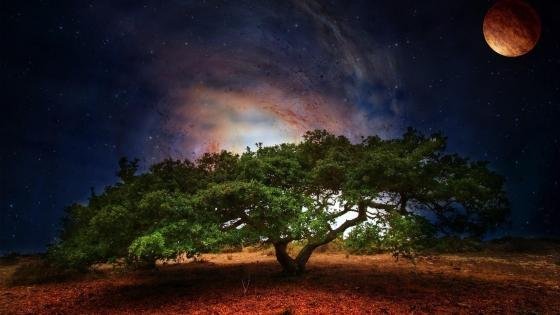 Lone tree fantasy art wallpaper