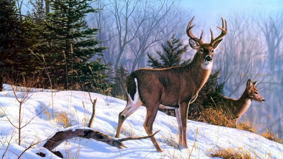 White-tailed deer painting wallpaper