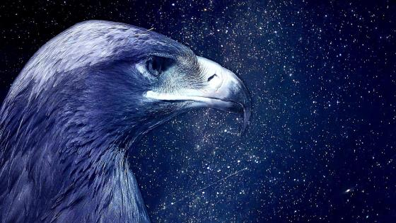 Blue Eagle in the starry night sky wallpaper