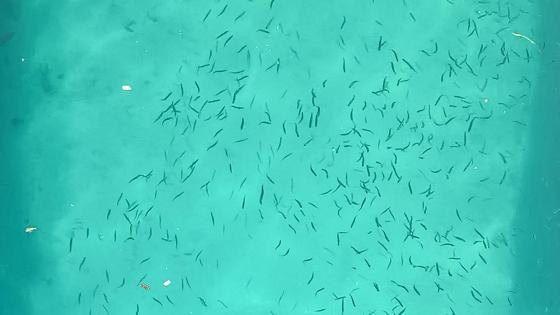Fishes in the water wallpaper