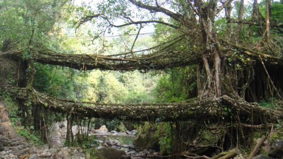 Double Decker Root Bridge wallpaper