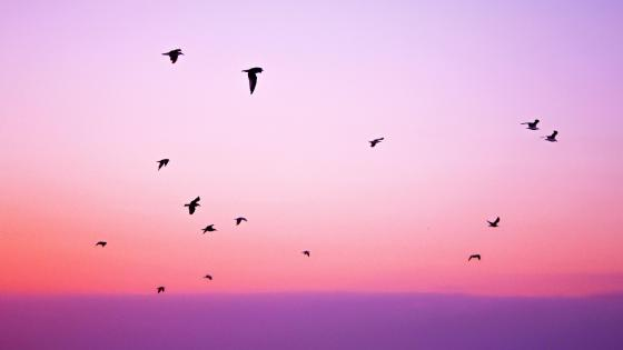 Bird migration at the sunrise wallpaper