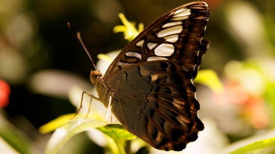 Butterfly on the plant  wallpaper