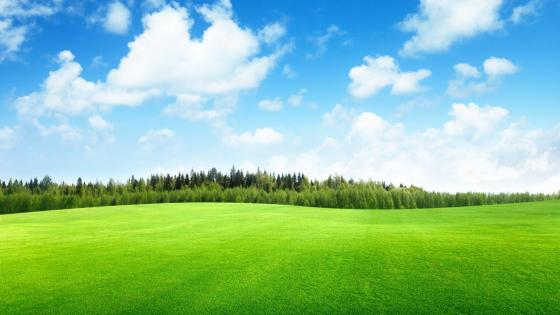 Field of grass wallpaper