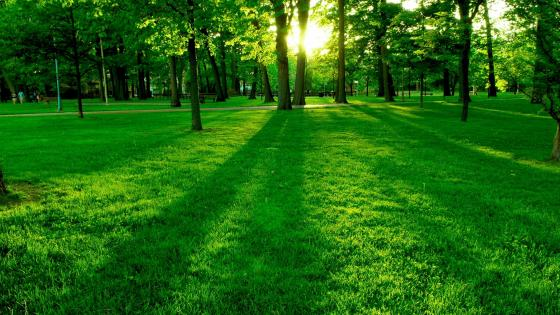 Green lawn in the park wallpaper