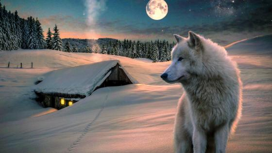White wolf in the snow - Fantasy art wallpaper