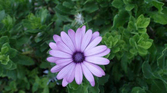 Purple flower in the garden wallpaper
