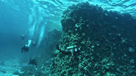 Scuba diving in Hurghada, Egypt wallpaper