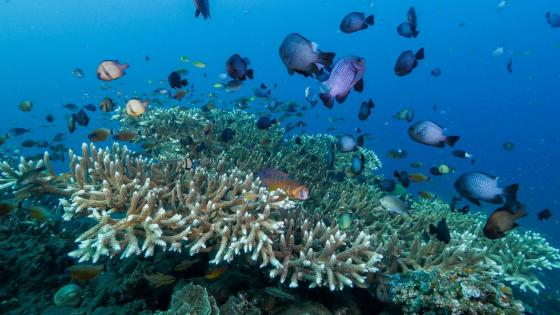 Coral reef with fishes in Bali  wallpaper