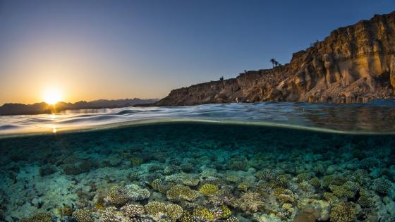 Sunset landscape with underwater corals wallpaper