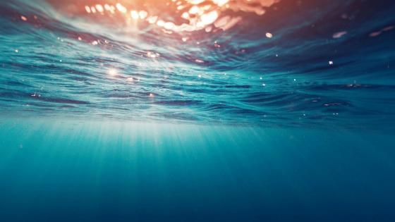 Sunrays under the water wallpaper