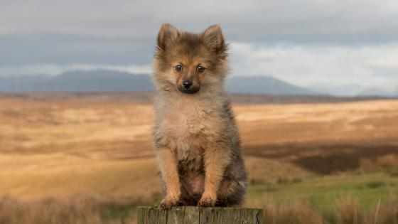 Lonely fluffy puppy dog wallpaper