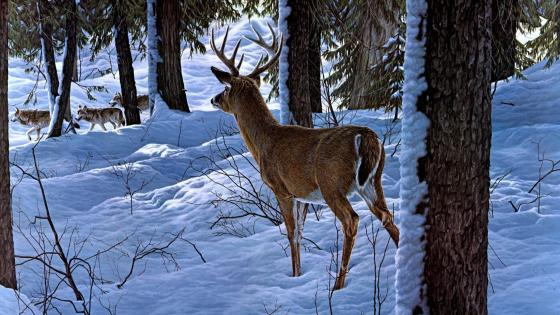 Deer in the winter forest - Painting art wallpaper