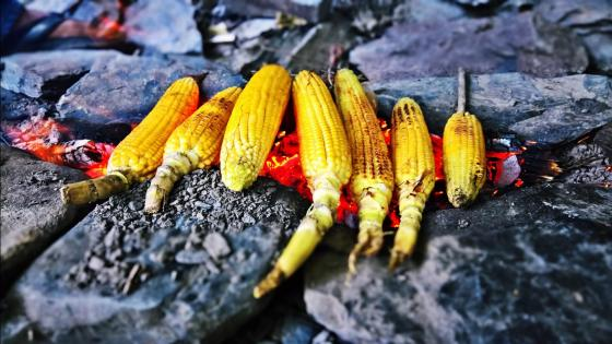 Grilled Corn wallpaper